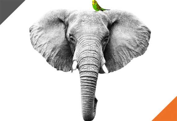 home_elefante
